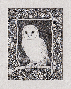 tiny_owl